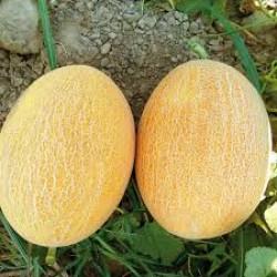 Ananas Kavun Fidesi