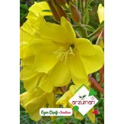 Ezan Çiçeği