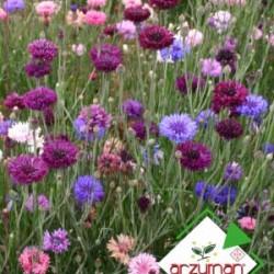 Kontur Çiçeği